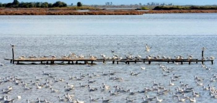 Ο Φορέας Διαχειρίσης Λιμνοθάλασσας Μεσολογγίου για την Παγκόσμια Ημερα Υγροτόπων