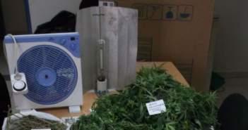 Συνελήφθη στον Πύργο, 36χρονος για καλλιέργεια ναρκωτικών
