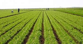 Έλλειμμα στρατηγικής για την ανάπτυξη του αγροτικού τομέα διαπιστώνουν οι αγροτικοί συνεταιρισμοί