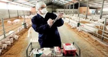 Επιλογή κτηνιάτρου εκτροφής στο Πρόγραμμα Εμβολιασμού για το μελιταίο πυρετό