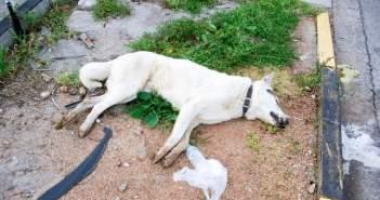 Θανάτωσαν 24 σκυλιά στον Αστακό
