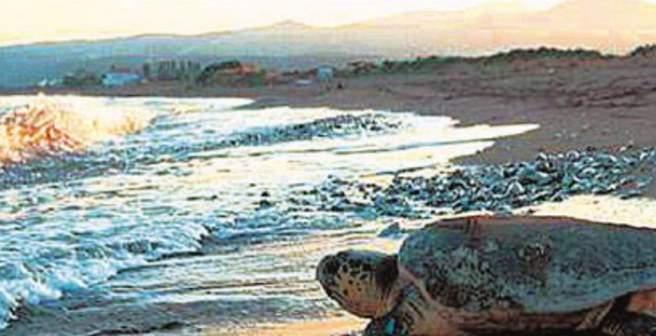 Nεκρές caretta-caretta στην παραλία της Αμφιλοχίας