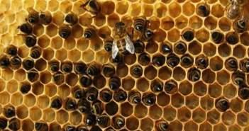 Δωρεάν σεμινάρια μελισσοκομίας στο Μεσολόγγι