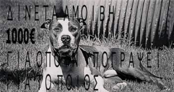 Ηλεία: Επικήρυξαν στο facebook τον δολοφόνο του σκύλου που βλέπετε