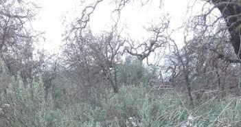 Στην περιοχή της Παλαιομάνινας λαθροϋλοτόμοι έκοψαν αιωνόβιες βελανιδιές (ΔΕΙΤΕ ΦΩΤΟ)