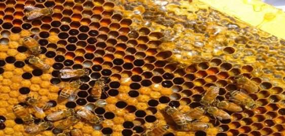 5,7 εκατ. ευρώ για τη μελισσοκομία