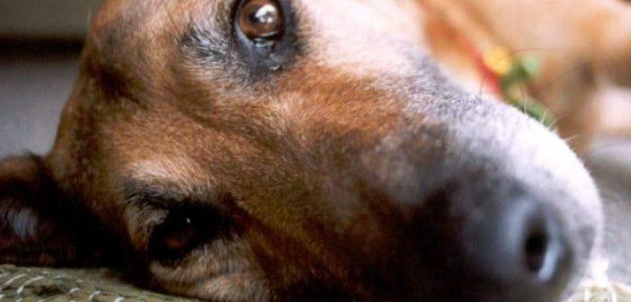 AXAΪΑ – ΦΡΙΚΗ! Σκοτώνουν τα σκυλιά με φόλες – ΔΕΙΤΕ ΒΙΝΤΕΟ (Προσοχή, σκληρές εικόνες)
