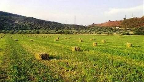 ΦΠΑ 24% καίει αγρότες και κτηνοτρόφους