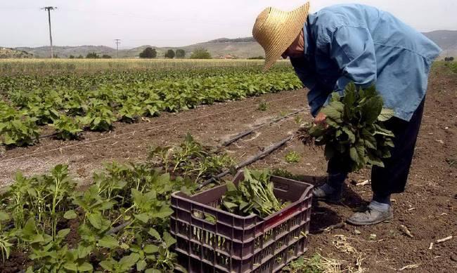 Τι φόρο θα πληρώσουν οι αγρότες