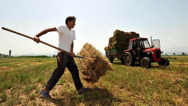 Eπιλέξιμα μέχρι 250 στρέμματα θα είναι για κάθε νέο αγρότη