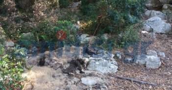 ΑΣΤΑΚΟΣ – ΕΙΚΟΝΕΣ ΦΡΙΚΗΣ: Έδεσαν σκύλο σε δέντρο και τον άφησαν να πεθάνει! (ΔΕΙΤΕ ΦΩΤΟ)
