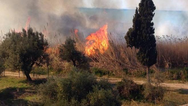 Φωτιά ξέσπασε στη Θέα Πατρών – Οι ισχυροί άνεμοι δυσκολεύουν το έργο της κατάσβεσης