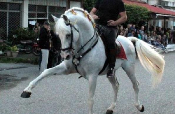 Ένα άλογο χορεύει τα καγκέλια μπροστά στο κλαρίνο του Κοκκώνη!