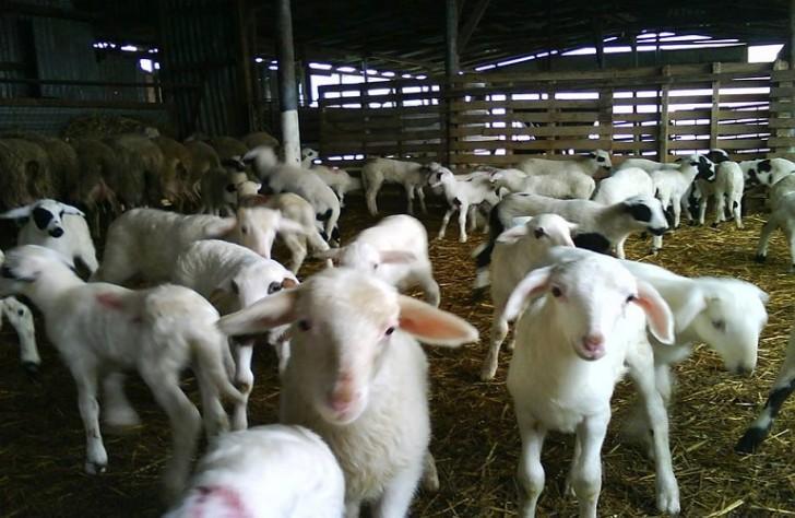 Ημερίδα για την κτηνοτροφία από την Ένωση Αγρινίου