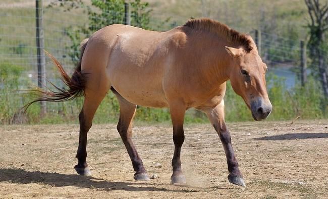 Τρόμος στην Ιονία Οδό – Τέσσερα νεκρά άλογα μετά από σύγκρουση (ΔΕΙΤΕ ΦΩΤΟ)