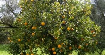 Θέρμο: Ενέργειες Κωνσταντάρα ώστε να αναγνωριστεί ως ΠΟΠ το «Σαγκουίνι Γουρίτσης»
