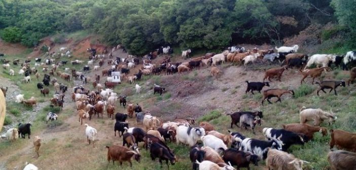 Παράταση στη Βιολογική Κτηνοτροφία