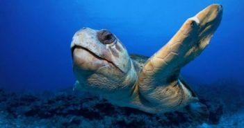 Νεκρή θαλάσσια χελώνα στη Ζάκυνθο