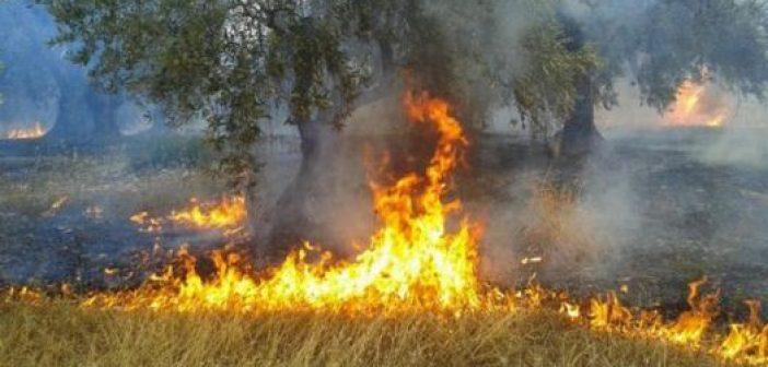 Ναύπακτος: Φωτιά στον κόμβο του Μολυκρείου (ΔΕΙΤΕ ΦΩΤΟ-ΒΙΝΤΕΟ)