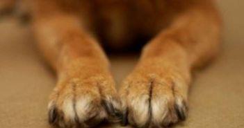 Κλοπή σκύλου καταγγέλλει η φιλοζωική Μεσολογγίου
