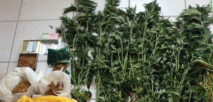 Ορεινή Ναυπακτία: 57χρονος καλλιεργούσε κάνναβη στο δάσος! (ΔΕΙΤΕ ΦΩΤΟ)