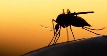 Συναγερμός για την ελονοσία σε Αχαΐα και Ηλεία