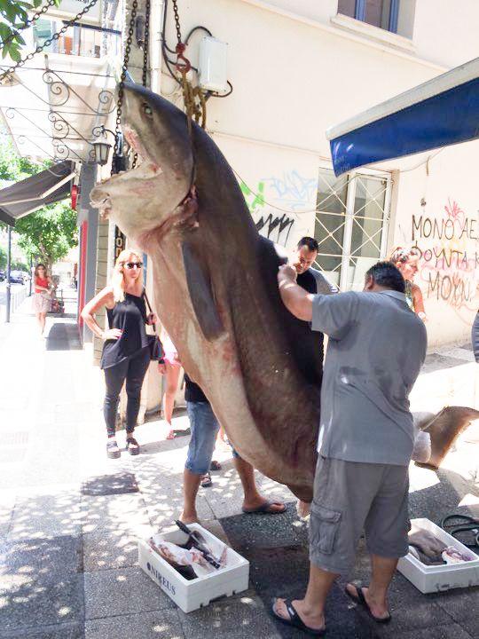"""Ένας """"Κόπανος"""" 300 κιλών στη Ι. Σταΐκου!!! (ΔΕΙΤΕ ΦΩΤΟ)"""