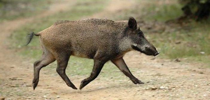 Ευρυτανία: Η σφαίρα εξοστρακίστηκε και χτύπησε τον κυνηγό αντί για το αγριογούρουνο – Πανικός στα Άγραφα!