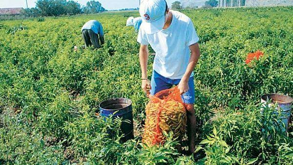 ΕΛΓΑ: Ξεκίνησαν οι πληρωμές αποζημιώσεων σε αγρότες – 222.074,97 ευρώ για τους αγρότες της Αιτωλοακαρνανίας