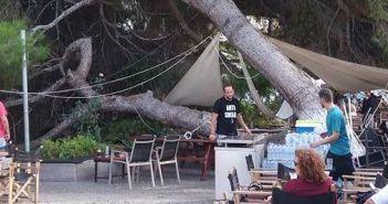 Δυτική Ελλάδα: Έπεσε δένδρο πάνω σε καφετέρια! (ΔΕΙΤΕ ΦΩΤΟ)