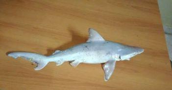 Ψαράς έπιασε μικρό καρχαρία στον Αμβρακικό Κόλπο (ΔΕΙΤΕ ΦΩΤΟ)