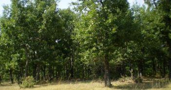 Σκουρτού: Ημερίδα για τα δάση βελανιδιάς – Tο παράδειγμα του Ξηρομέρου