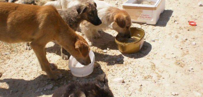 Βεβαίωση μετακίνησης για τη σίτιση των αδέσποτων ζώων από τον δήμο Αγρινίου