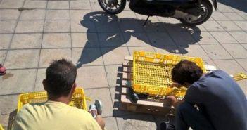 Λευκάδα: Διάσωση Caretta – Caretta (ΔΕΙΤΕ ΒΙΝΤΕΟ-ΦΩΤΟ)