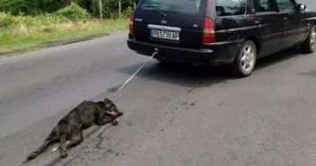 Εικόνες ΣΟΚ – Οδηγός αυτοκινήτου σέρνει στο δρόμο δεμένο σκύλο! (ΔΕΙΤΕ ΒΙΝΤΕΟ)