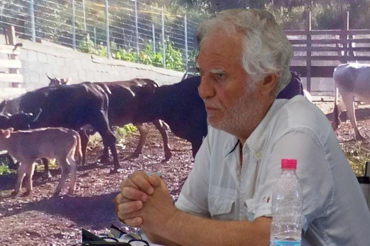 """Λευκάδα: """"Το πρόβλημα με τα ανεπιτήρητα ζώα διογκώνεται καθημερινά"""""""