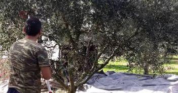 Δυτική Ελλάδα – τραγωδία: 42χρονος πατέρας «έφυγε» ενώ μάζευε ελιές!