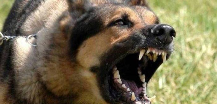 Μητέρα 9χρονου στις Σέρρες: Εγώ γλίτωσα το παιδί μου από τα δόντια των σκύλων (VIDEO)