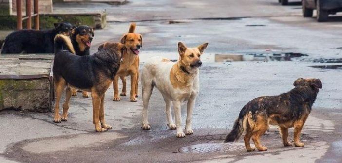 Γονείς και κάτοικοι καλούν το Δήμο Αγρινίου για τα αδέσποτα στο Παναιτώλιο