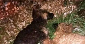 Δυτική Ελλάδα: Θέρισαν με φόλες σκυλιά και γατιά – Επικήρυξαν τον δράστη! (ΔΕΙΤΕ ΦΩΤΟ)