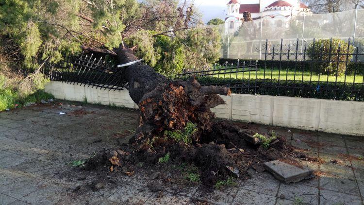 """Αγρίνιο: Οι σφοδροί άνεμοι ξερίζωσαν δέντρο – """"Προσγειώθηκε"""" στην περίφραξη του Ι.Ν. Αγίου Δημητρίου!!! (ΔΕΙΤΕ ΦΩΤΟ)"""
