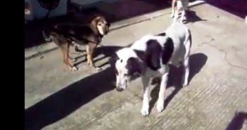 Και μη χειρότερα! 77χρονος επιχείρησε να συνουσιαστεί με σκύλο στην Αμαλιάδα!!!