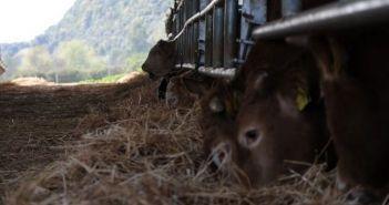Δυτική Ελλάδα: Ο κτηνοτρόφος που έθαψε 10.000 ευρώ… και τα ζώα τα «έφαγαν»… και άλλες περιπτώσεις!
