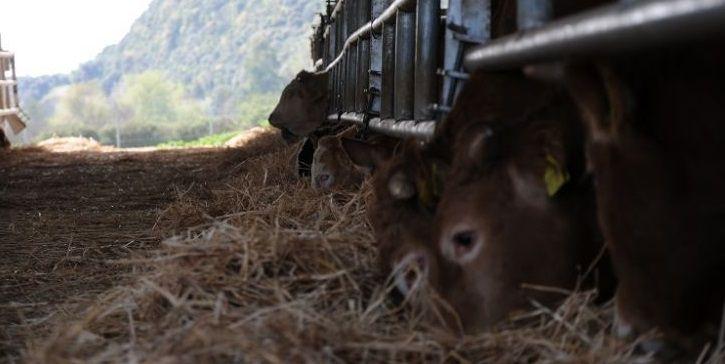 Ξεκίνησε το πρόγραμμα Βιολογικής Κτηνοτροφίας