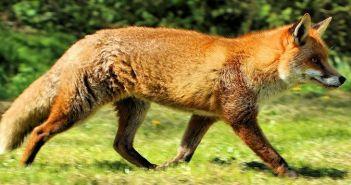 Αιτωλοακαρνανία: Ρίψεις εμβολίων κατά της λύσσας