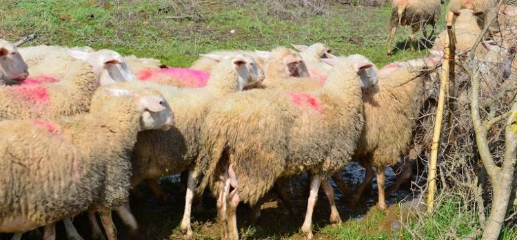 Νέα μετάθεση για τη Βιολογική Κτηνοτροφία – Από 30 Μαρτίου οι αιτήσεις