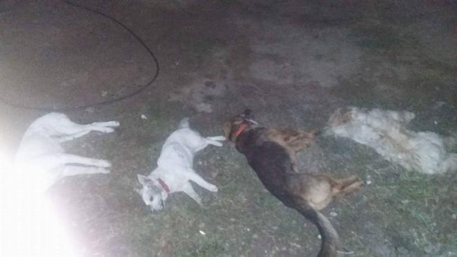 Δυτική Ελλάδα: Κτηνωδία – Δηλητηρίασαν τέσσερα σκυλιά μέσα στην αυλή σπιτιού – «Έσβησαν» με φρικτούς πόνους! (ΠΡΟΣΟΧΗ – ΣΚΛΗΡΕΣ ΕΙΚΟΝΕΣ)