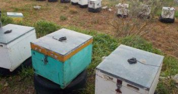 Αιτωλοακαρνανία: Ταχύρρυθμο πρόγραμμα Μελισσοκομίας