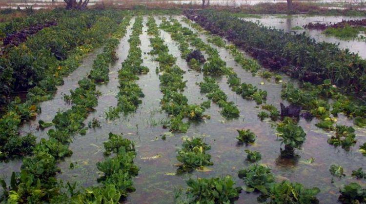 Αποζημιώσεις από τον ΕΛΓΑ σε αγρότες της Αιτωλοακαρνανίας