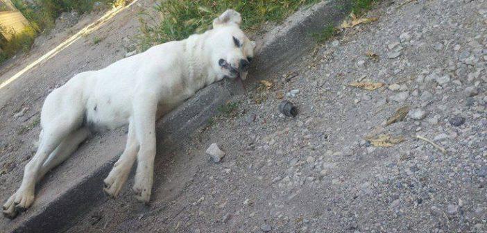 Φόλες ασυνείδητων σε γάτες και σκυλιά στην περιοχή της Αμφιλοχίας